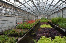 МБУ «Городской центр по благоустройству и озеленению г. Ульяновска»